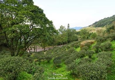 三峽熊空茶園 (10)