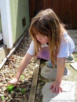 First gardening
