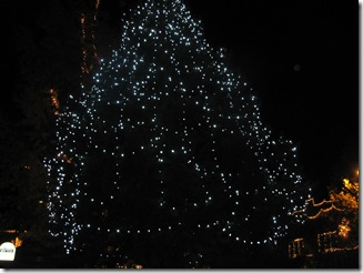 Ashland parade, tree lit up