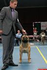 20130510-Bullmastiff-Worldcup-0462.jpg
