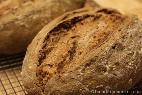 66-percent-sourdough-rye_1951