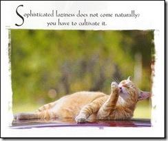 cat_laziness