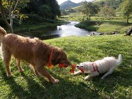 Dogs Trekking 4 (99)