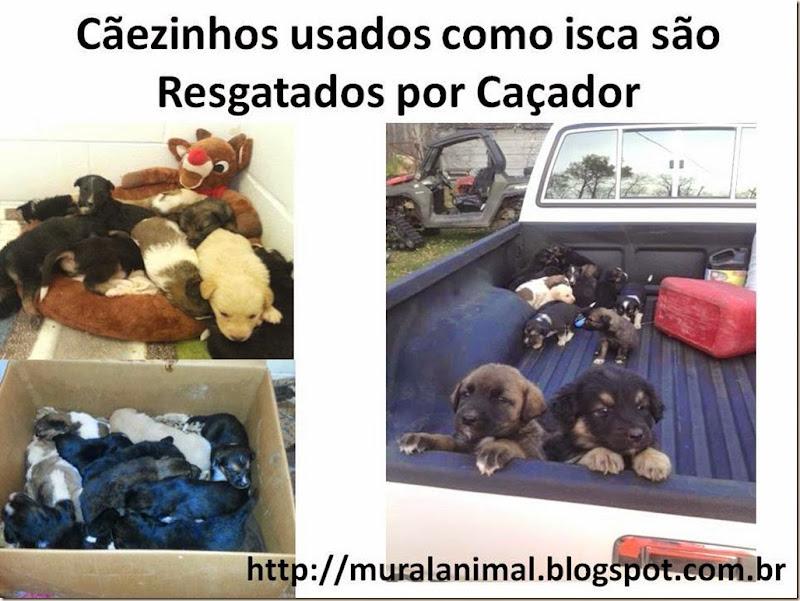 Cãezinhos usados como isca são Resgatados por Caçador
