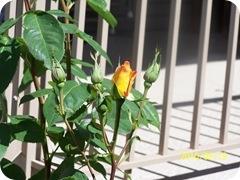 028.Roses