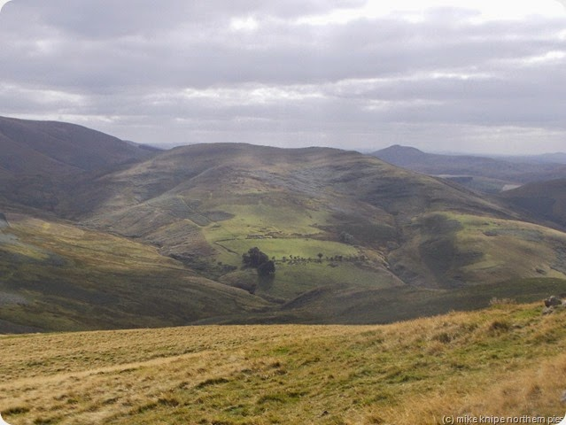 more cheviots