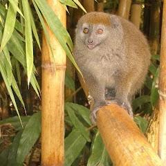 Lemurs Park::IMGP4480