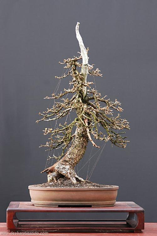 bonsais arvores em miniatura desbaratinando (18)