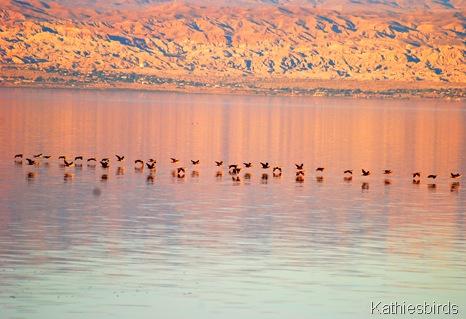 6. cormorants-kab