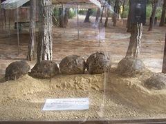 2008.09.10-005 oeufs de dinosaures