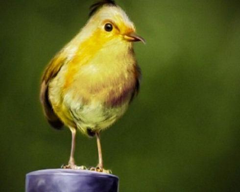Real-Life-Angry-Birds-003