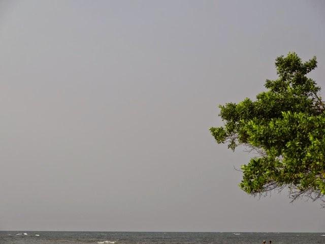 Forêt équatoriale (6)
