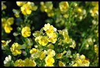 01f-flowers