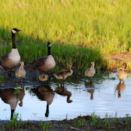Time for a drink by Heather Donahue - Animals Birds