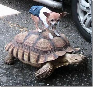 fotos divertidas de animales (7)