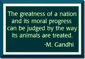 Gandhi (8)