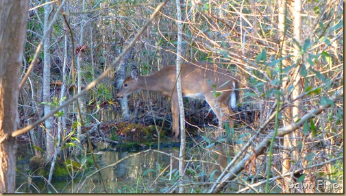 Goose Creek State Park _024