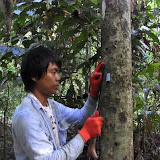 Tagging a tree (photo by Kenin)