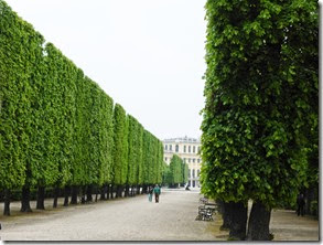 Vienna sch hedge_edited-1