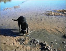 Detecting Dog Bridge 09