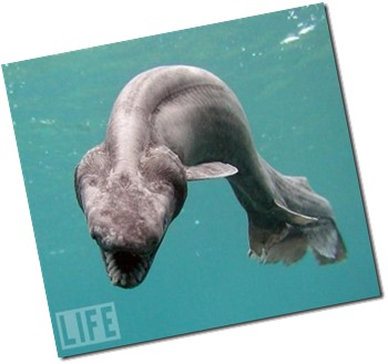 "'What is that?' You might ask…Once thought to be extinct, the Frilled Shark is often called a ""living fossil"" because the species has barely changed since prehistoric times."