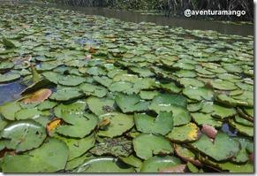 Vegetação aquática