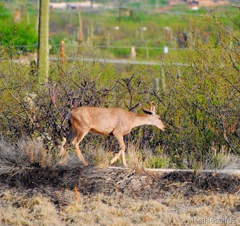 2. deer-kab