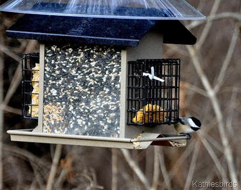11. 12-21-14 bird feeder-kab