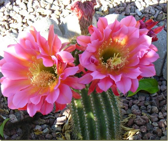 flower4242012 004