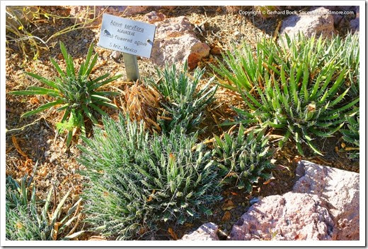 131203_TucsonBotanicalGarden_094