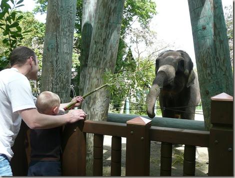 Zoo 018