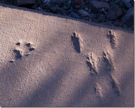 Apache Trail AZ 026