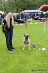 20100513-Bullmastiff-Clubmatch_30960.jpg