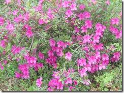 flower06