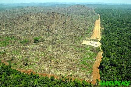 把森林砍光光,林北又賺一筆啦!deforestration