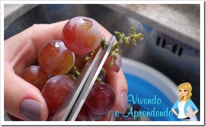 Higienizando as uvas4