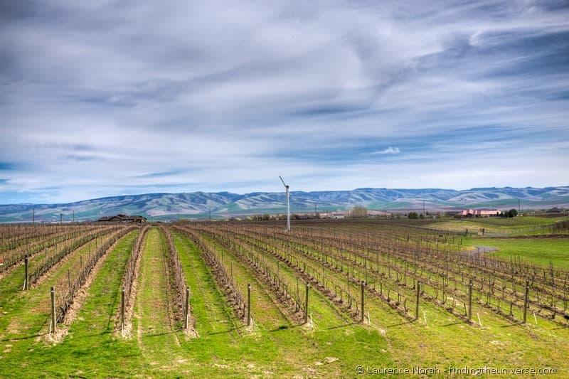 Pepper bridge winery vineyards blue mountains