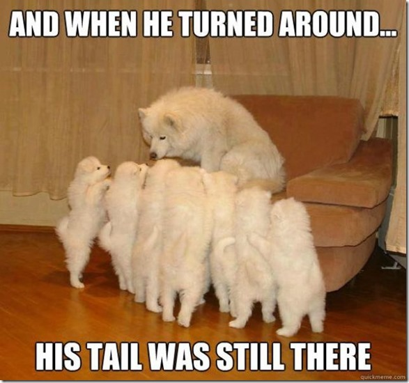 storytelling-dog-meme-4