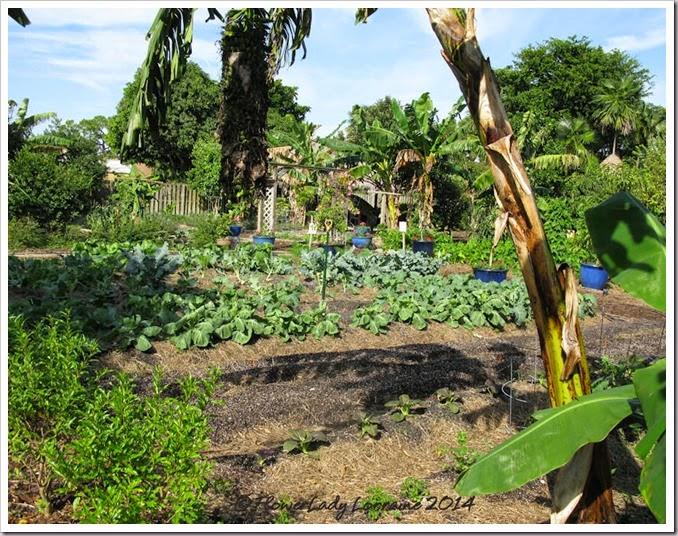 11-20-veg-garden2