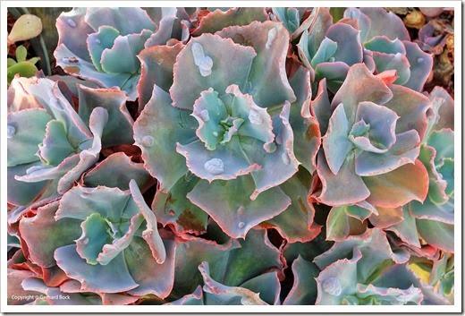 130928_SucculentExtravaganza_110_thumb