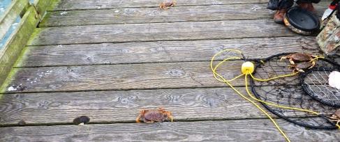 CrabbingOffthePublicPier-3-2014-04-26-09-43.jpg