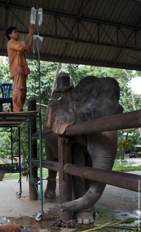 elephant-hospital-5