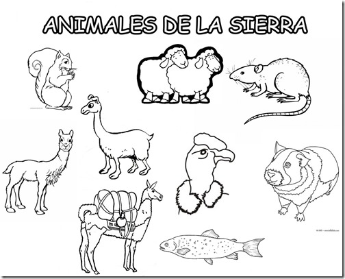colorear animales peruanos | Colorear