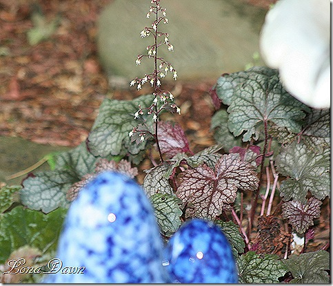 Heuchera_PurplePalace2