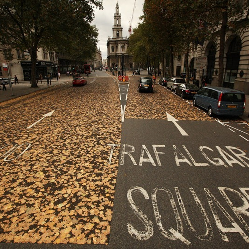 Carpet of Leaves Baffles Motorists and Pedestrians in London