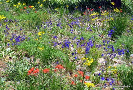 Wildflowers at the Hells Canyon Overlook