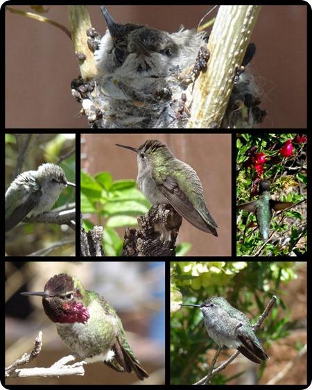 Desert museum birds_4501
