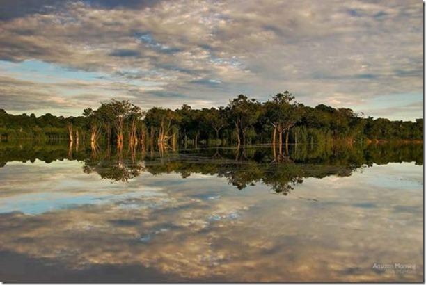 beautiful-amazon-rain-forest-20
