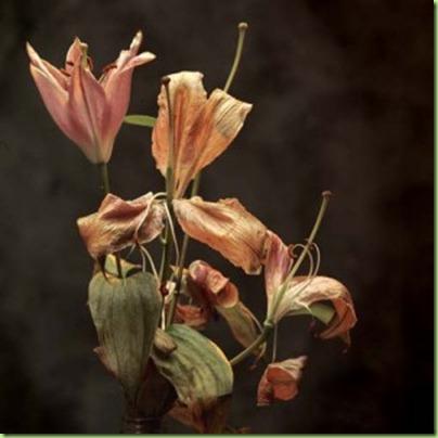 dead-lilies-300x300