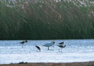 L'Europe a perdu 421 millions d'oiseaux en 30 ans (étude)